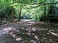 Woodland path in Gernon Bushes Nature Reserve, Theydon Garnon, Essex 02.jpg