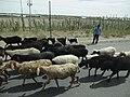 Yarkand on G315 Highway, Xinjiang 1.jpg