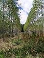 Young Plantation near Bank Farm - geograph.org.uk - 34553.jpg