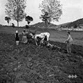 Za repo orjejo, Hrušica 1955 (2).jpg