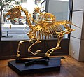 'Goldcup' this is and example of Stephen Cawston's Golden Sculptures.jpg