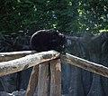 Ведмідь.JPG