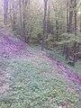 """Дел од Западна Македонија, планина """"Бистра"""" 44.jpg"""