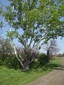 Дендрологічний парк 203.jpg