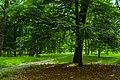 Дерева у Дубовому гаю 03.jpg