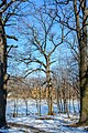 Дубовий гай, Полтавський р-н, с. Горбанівка - 2016-02-21 012.jpg