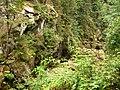 Карпати. Національний природний парк «Сколівські Бескиди». - panoramio.jpg