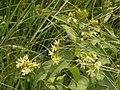 Квіткові рослини.JPG