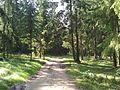 Лесная дорога - panoramio (50).jpg