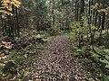 Лесные дорожки к Акуловскому 4.jpg