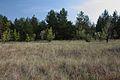 Лесок с южной стороны - panoramio.jpg