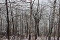 Лес на склоне. Сюктерка. Чебоксарский р-н. Чувашия. Ноябрь 2014 - panoramio.jpg