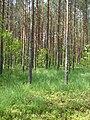 На околиці лісу, Поліський заповідник.jpg