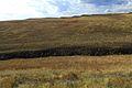 Овраг на склоне Утиной Горы - panoramio.jpg
