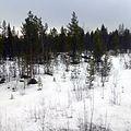 Озеро Мурдозеро - panoramio.jpg