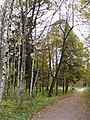 Осень в Дворцовом парке Гатчины - panoramio (3).jpg