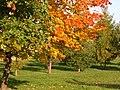 Осень в Зябликово - panoramio.jpg