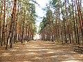 Парк «Северный лес», Воронеж 02.jpg