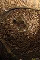Печера «Кришталева» 3.jpg