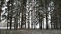 Пора искать подснежники. Лес около д. Нарат-Елга. Чистопольский р-н. РТ. Декабрь 2014 - panoramio.jpg