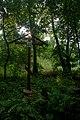 Родник у Кудеяровой горы - panoramio (2).jpg