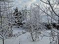Троян - panoramio (22).jpg