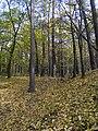 Украина, Киев - Голосеевский лес 66.jpg