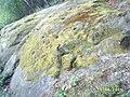 Юмрук скала - panoramio.jpg