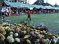 गोदावरी फूल५.jpg