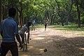 গজারী বনে বাচ্চাদের ক্রিকেট খেলা ২.jpg