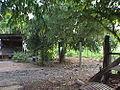 บ้านน้อง Ban Nong - panoramio - CHAMRAT CHAROENKHET.jpg