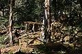 原始森林 - panoramio (1).jpg