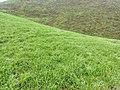城步南山牧场20150927 - panoramio (73).jpg