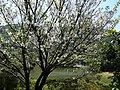 大屯自然公園 Datun Narural Park - panoramio.jpg