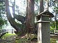 将軍杉と平維茂墓碑.JPG