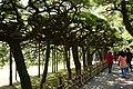 屏風松 Byobumatsu - panoramio.jpg