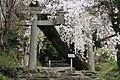 市之倉熊野神社の登り口 「老幹をくぐれば花のしなだれり」 - panoramio.jpg