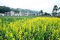 广州最美乡村—红山村 - panoramio (17).jpg