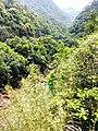 新丰司茅坪林场20150412 - panoramio.jpg