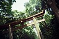 明治神宮 Tokyo Japan Kodak 500t 5219 Lomo Lc A (184826987).jpeg