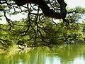 栗林公園 Ritsurin Park - panoramio (6).jpg