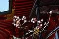 桜2011 - panoramio.jpg