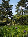 知立市八橋町 - panoramio.jpg