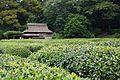 福田茶屋 Fukuda Chaya - panoramio.jpg