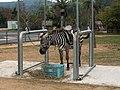 秋吉台自然動物公園サファリランド シマウマの乗馬体験 zabra.jpg