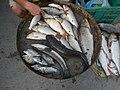 06586jfCandaba, Pampanga Market Fishes Foods Landmarksfvf 06.jpg