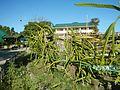09471jfAlexis G. Santos National High School Liciada, Bustos Bulacanfvf 38.jpg