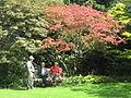 11 Arboretum Kalmthout.JPG