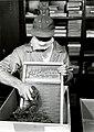1950. W.J. Buckhorn demonstrates the first step for recovery of hemlock looper eggs. BEPQ. Portland, Oregon. (33335357631).jpg