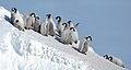 2007 Snow-Hill-Island Luyten-De-Hauwere-Emperor-Penguin-15.jpg